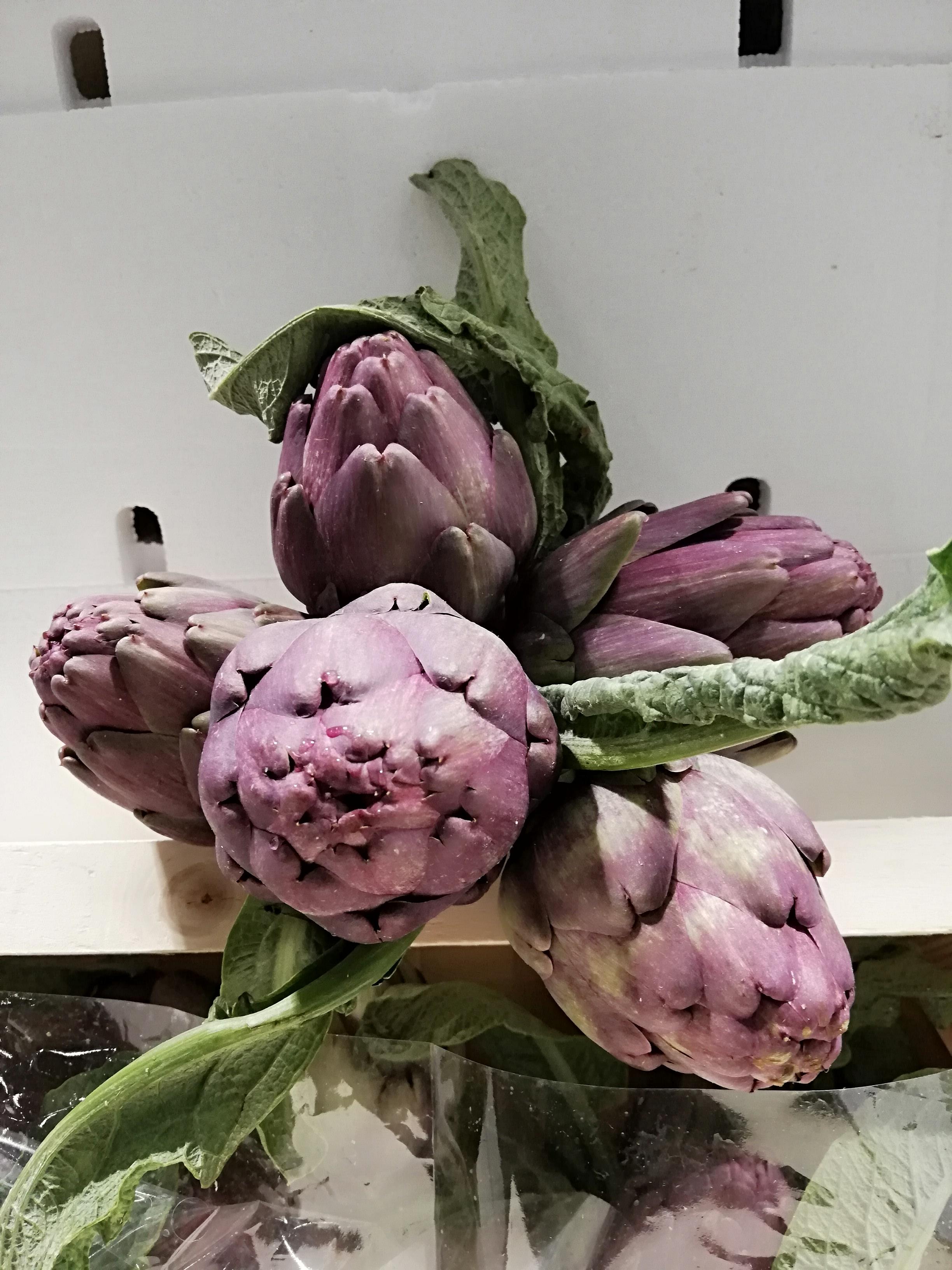 Violette artiskokker